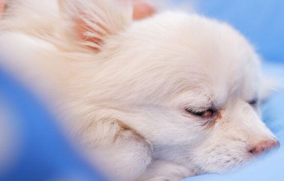 Pet Cryotherapy